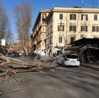 Vento, albero su auto a Guidonia: ucciso un uomo. A Capena padre giù dalla scala: figlio...