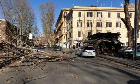 Vento, albero su auto a Guidonia: ucciso un uomo. A Capena padre giù dalla scala: figlio muore travolto