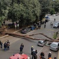 Roma, un pino di 30 metri precipita in viale Mazzini e si abbatte su auto: due feriti gravi