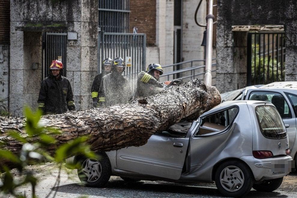 Roma, un pino precipita su auto in viale Mazzini: due feriti
