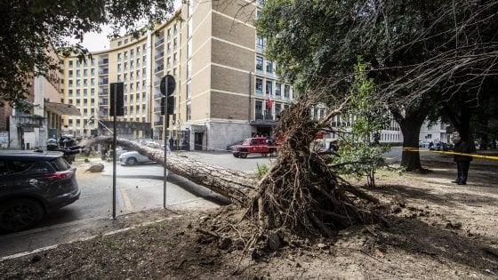"""Roma, """"Stop alla psicosi del pino killer in quei filari la nostra identità"""""""