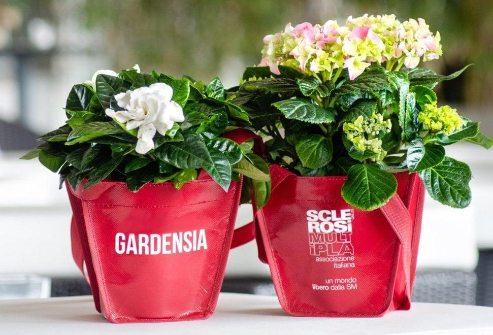 Bentornata Gardensia, la campagna dedicata alle donne con sclerosi multipla in 100 piazze di Roma e provincia
