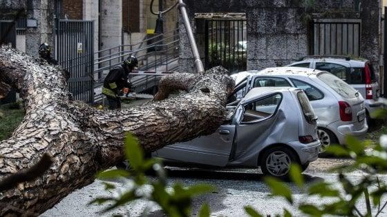 Monitoraggio addio: a Roma finiti i soldi per il taglio degli alberi pericolanti
