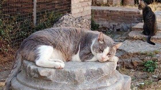 """Roma, in arrivo l'obbligo di microchip per tutti i gatti della città. L'Enpa: """"Sì alla rete di protezione dei mici"""""""