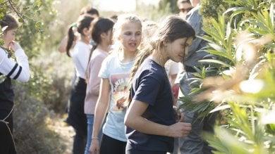 I ragazzi e le foreste, alla Fao laboratori  e quiz per imparare ad amare gli alberi