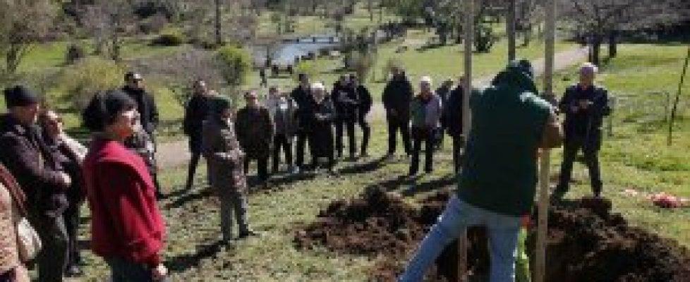 """Roma,   Rete del Verde: """"Bandi europei a sostegno della gestione dei parchi e della manutenzione degli alberi"""""""