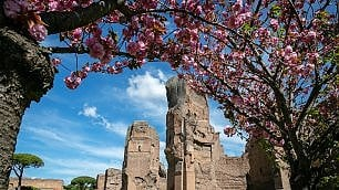 Roma, le Terme di Caracalla in fiore: esplosione di primavera di glicini e rose