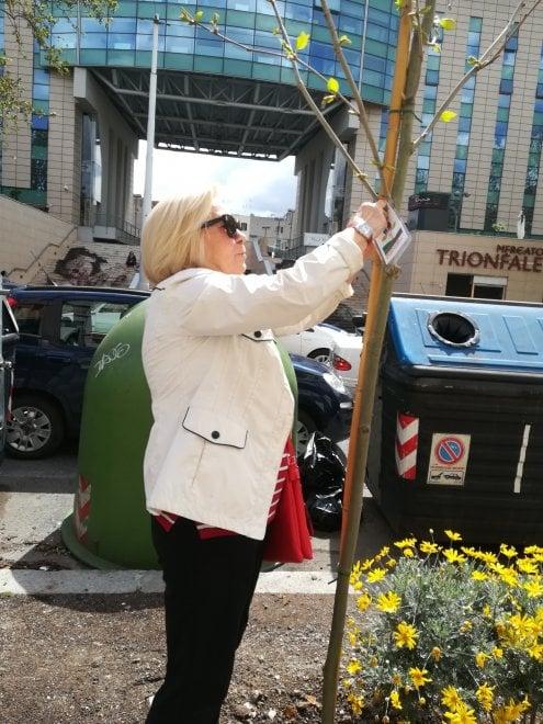 Roma, piantati 17 nuovi alberi a Trionfale donati da comitati e cittadini