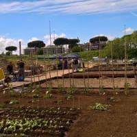 Roma, dalla Lituania al Casal Brunori per studiare gli orti urbani