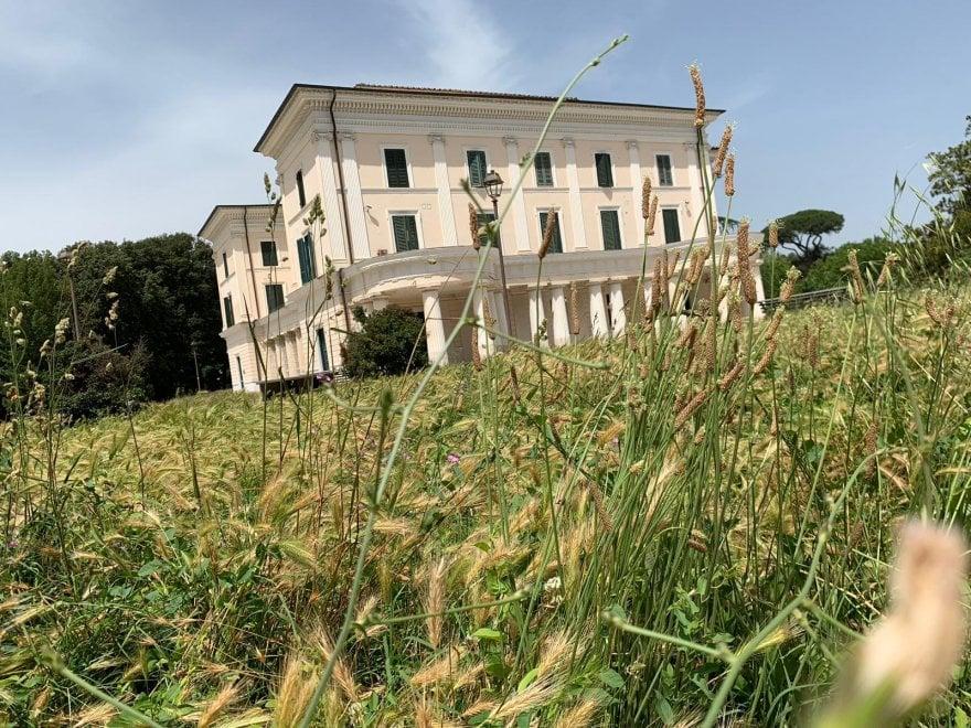 Erba alta a Villa Torlonia, il parco romano formato giungla