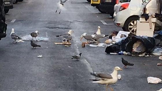 """Emergenza rifiuti, Roma Sud si ribella: """"Situazione al collasso"""""""