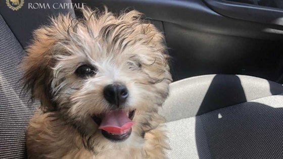 Roma, cucciolo usato per chiedere elemosina: vigile urbano lo adotta