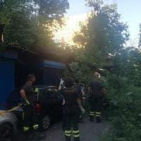 Roma, albero su auto in zona piazza Bologna: illeso il guidatore