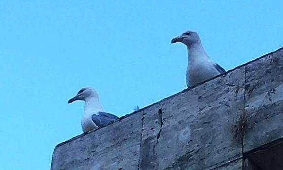 Uccelli (e la mia collega Ale)