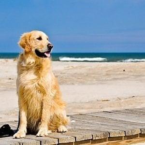 Fiumicino e Fregene, contrordine dal Tar: nessun obbligo di far entrare i cani nelle spiagge
