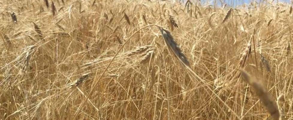 Lazio, nasce il bio distretto per rilanciare Amatrice