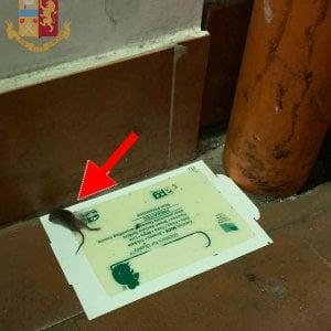 Roma, topi e blatte in cucina: multati tre locali a San Basilio