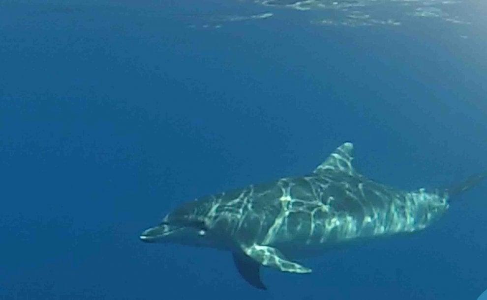 L'incontro emozionante con i cuccioli di delfino nel mare di Ostia