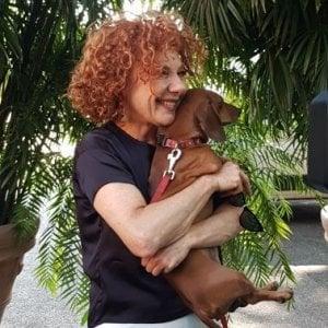Animali in vacanza, il vademecum dell'ordine dei veterinari di Roma
