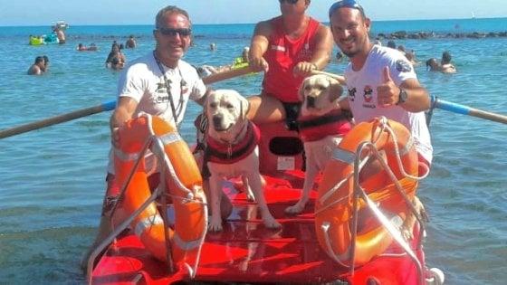 Rischiano annegamento, cani salvataggio in azione a Ostia ponente