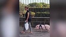 A spasso col maiale  che si chiama Dior  video