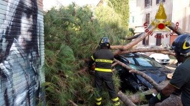 Paura alla Garbatella, un pino marittimo si schianta su auto in sosta. Nessun ferito