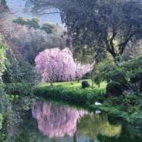 Giardini di Ninfa, aperture straordinarie a ottobre con visite a Cori, Sermoneta