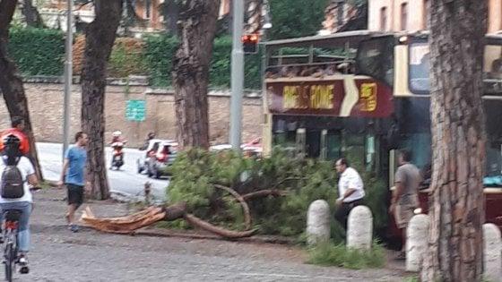 Roma, rami cadono su bus turistico a due piani al Circo Massimo