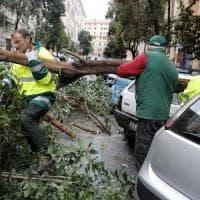 Roma, soldi e gare ok ma sul verde cittadino è tutto fermo