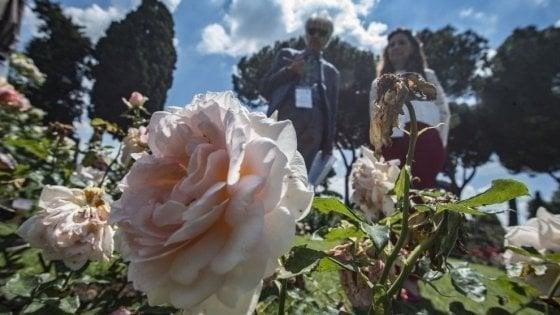 Roma, il Roseto comunale riapre a ottobre per due settimane