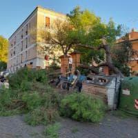Roma, albero cade in via Passino alla Garbatella
