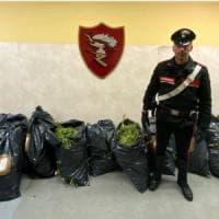 Inseguimento sul Gra e scattano le manette: presi con 93 chili di marijuana