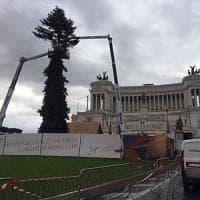 Spelacchio-ter, è arrivato l'albero di Natale in piazza Venezia