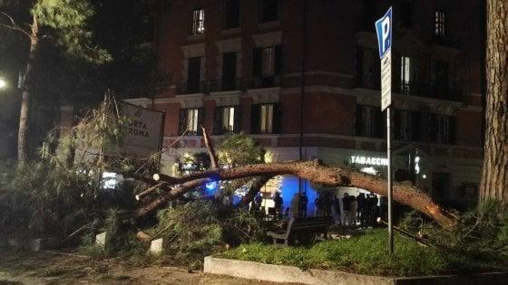 Roma, grosso ramo cade a corso Trieste: ferita lievemente una donna