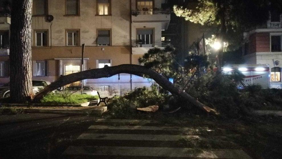 Roma, grosso ramo crolla sulle strisce a Corso Trieste