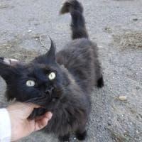 Roma, gatto abbandonato nell'ex ospedale trova casa dopo l'appello social