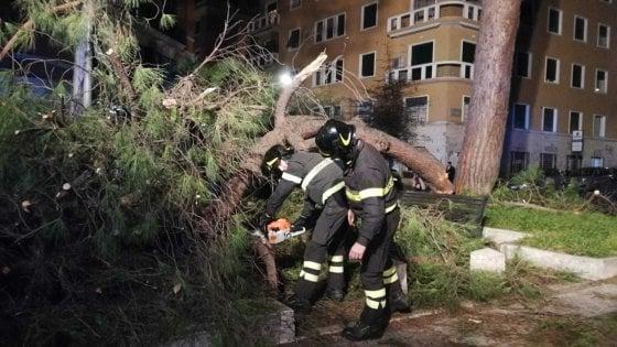 """Alberi Roma, la rivolta del quartiere Trieste: """"Non abbattete quei 157 pini"""""""