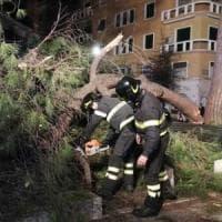 Alberi Roma, la rivolta del quartiere Trieste:
