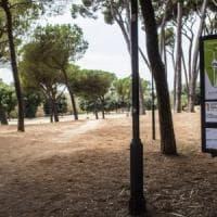 Roma, ancora una volpe investita e uccisa vicino a Villa Pamphilj