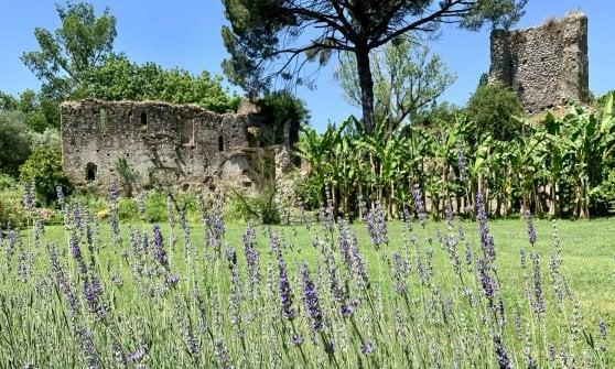 Il Giardino di Ninfa anticipa l'apertura: ecco quando prenderanno il via le visite