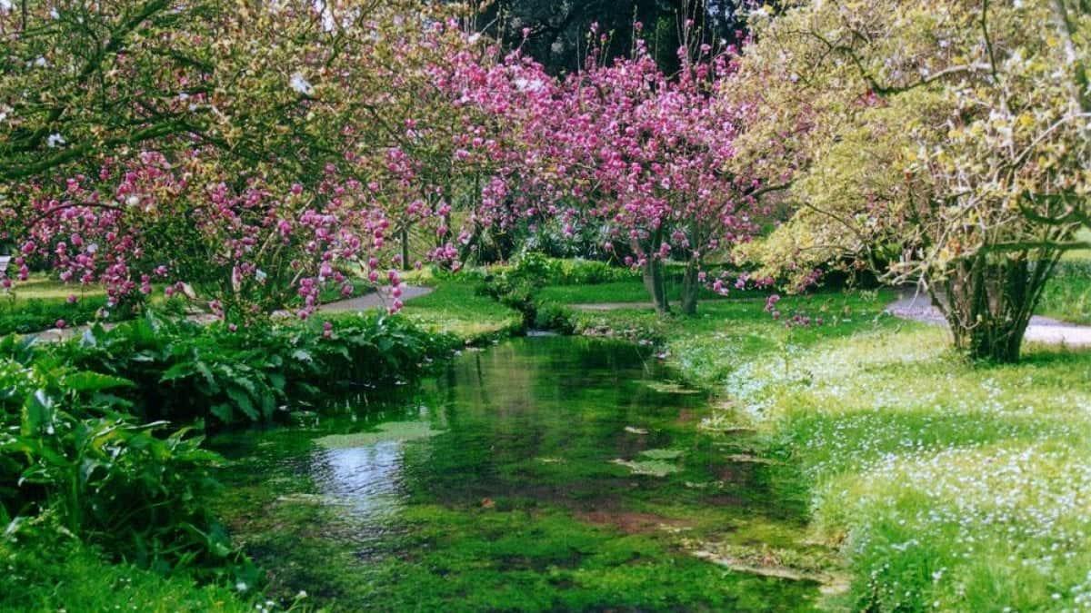 Giardini di Ninfa  c'è la visita virtuale