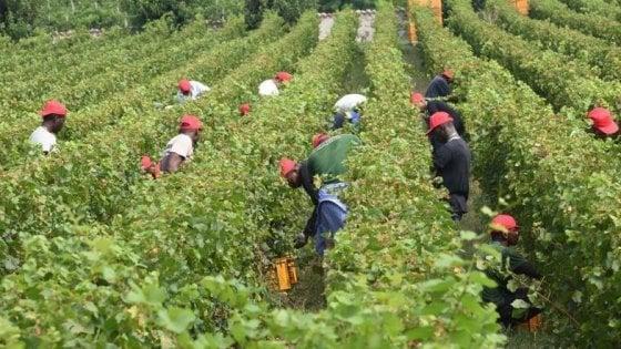 Latina, licenzia e pesta bracciante che chiede mascherine e protezioni: arrestato imprenditore agricolo