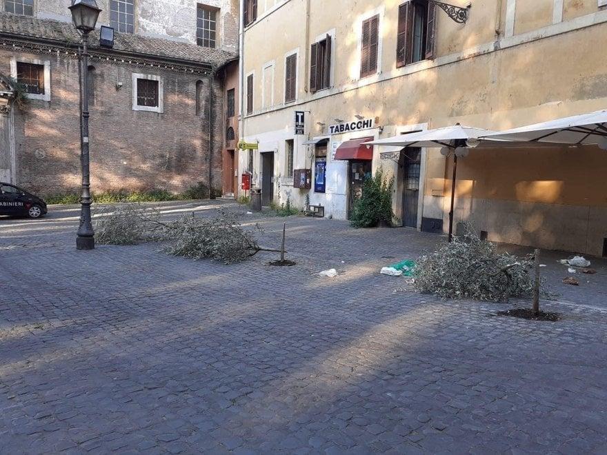 Roma, vandali abbattono gli ulivi piantati in piazza Sonnino