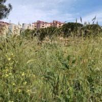 Il verde di Roma, Sos parchi pubblici: ecco le emergenze nel IX municipio