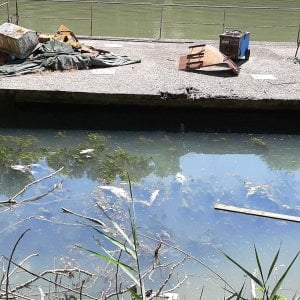 Roma, moria di pesci nel Tevere: sopralluogo dell'Asl e analisi delle acque