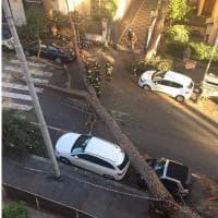 Montesacro, pino si schianta in strada, nessun ferito
