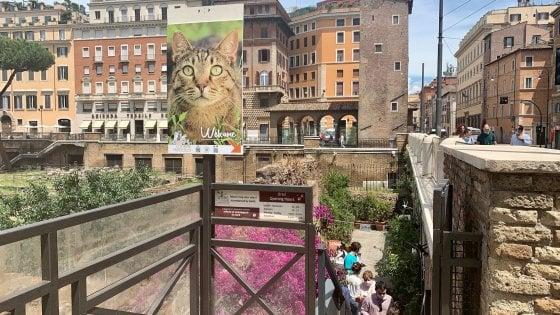 """Roma, a Torre Argentina sos gatti: """"Senza gli aiuti dei turisti la colonia felina è alla fame"""""""