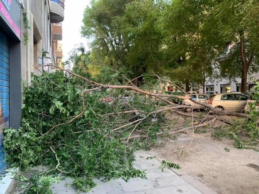"""Roma, un ramo di 10 metri crolla davanti a un portone a piazza Bologna. """"Il settimo caso in pochi giorni"""""""