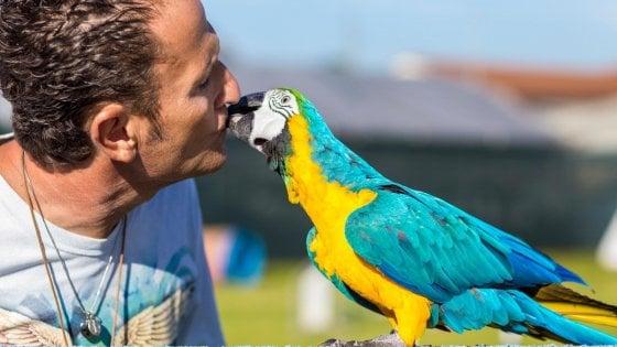 Pietre contro il pappagallo di Enzo Salvi: denunciato ragazzo di 25 anni a Ostia