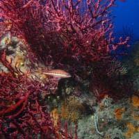 Cavallucci marini, delfini e gorgonie: nel mare di Roma la meraviglia che non ti aspetti